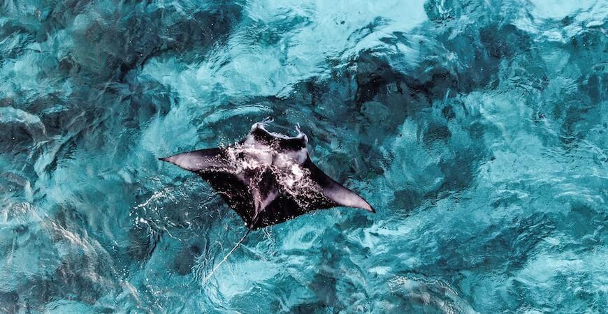 maldiverne rejse
