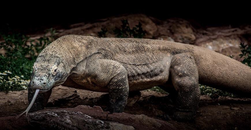 Komodo nationalpark
