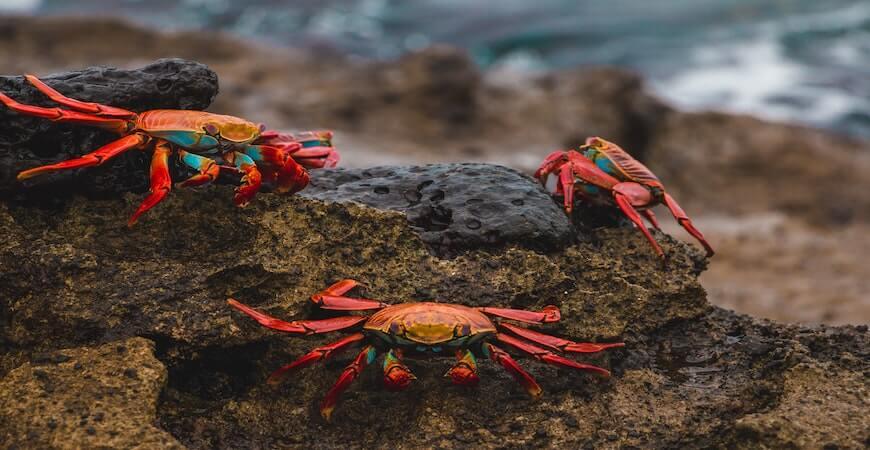 Galapagos øerne