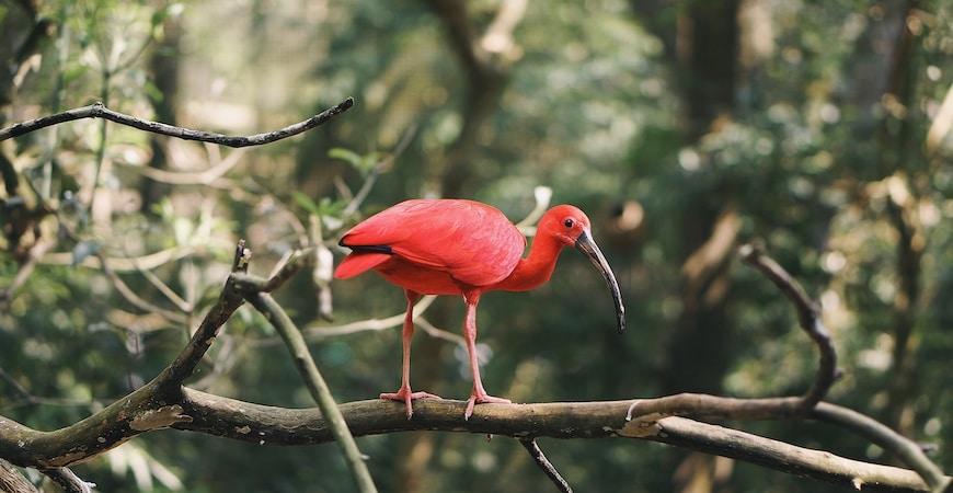 trinidad og tobago dyreliv
