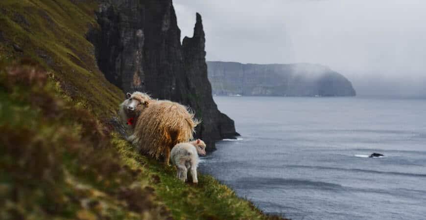 får færøerne