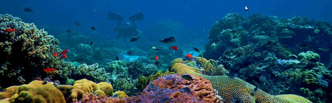 dykkerferie